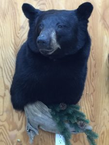 Black Bear 2015