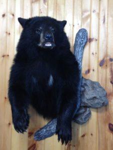 2012-blk-bear