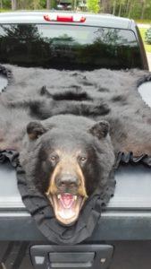 6FT-Black-Bear-2014