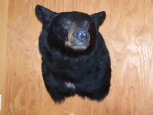 blk-bear-2009