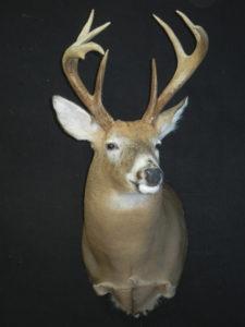 cowan-buck-2-2013