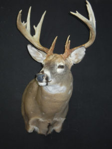cowan-buck-2013