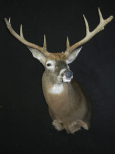 cuddiney-buck-2014